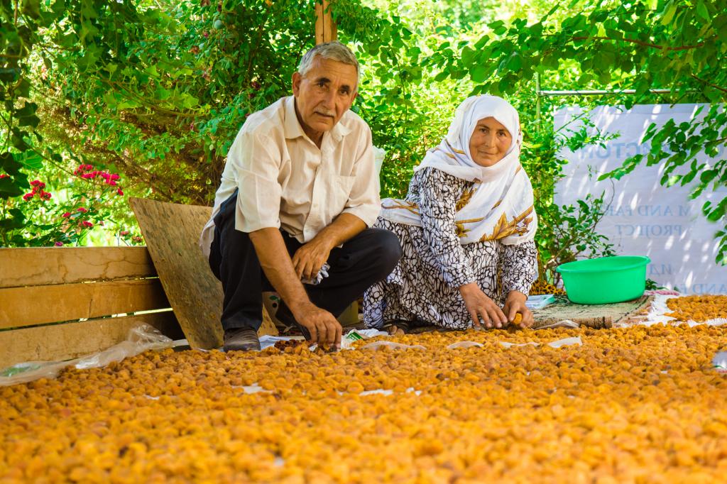 Apricot farmers in Tajikistan